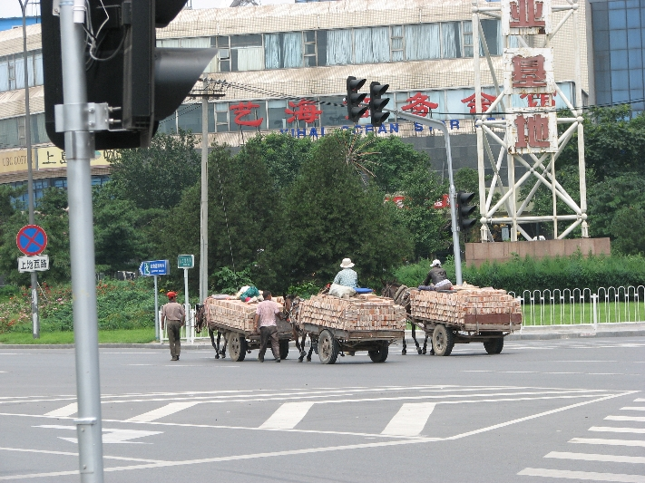 路上的大骡子 Mules on the Road!