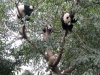 熊猫时间到了!Panda Time!