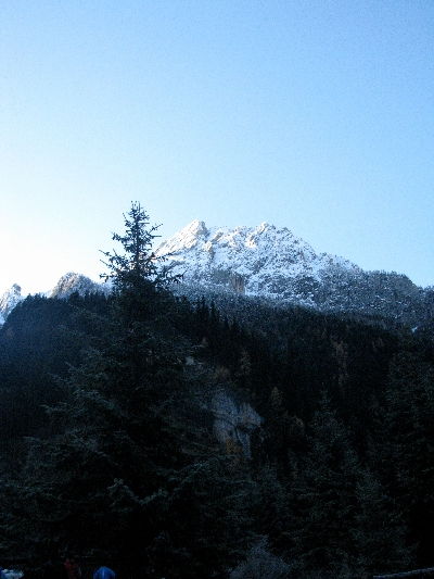 有山有...树 Mountain Trees