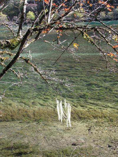 秋季树叶 Autumn Leaves