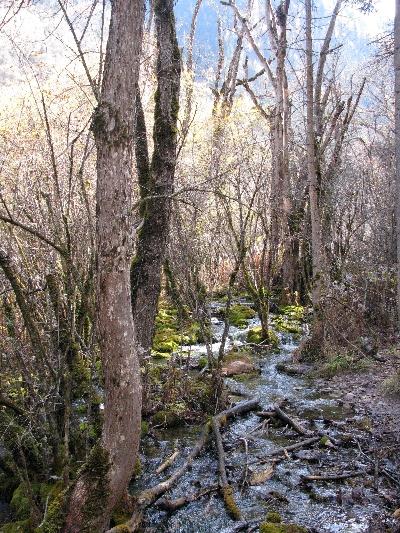 森林支流 Forest Creek