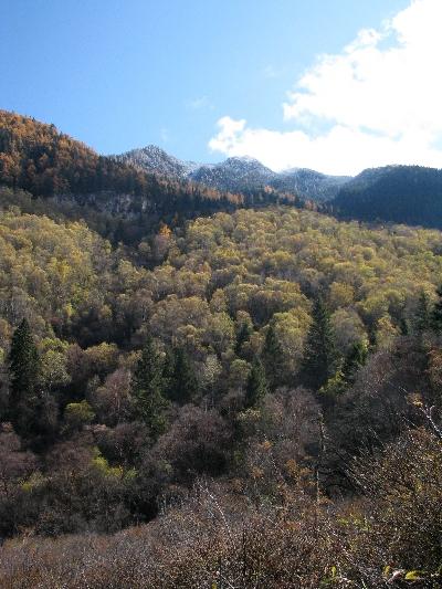 山上森林 Mountain Wood