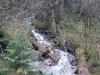 有树有水 Forest Creek