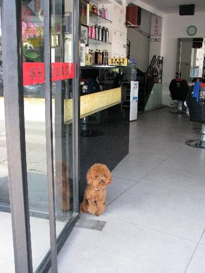 小狗!Dog!